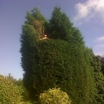 Hedge reduction-web