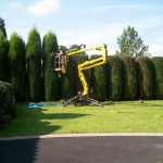 Hedge reshaping-web