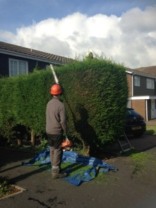 Hedge trimming (Small)