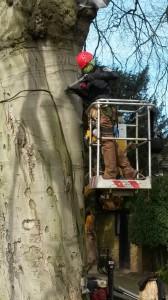 Tree Consultant - Resistograph