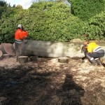AFTER Diseased beech tree removal (Small)