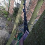 Cherry tree - cable bracing
