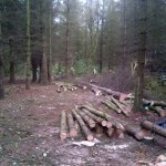Clearance of section of trees to make way for a community planting area 1 (Small)
