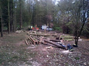 Clearance of section of trees to make way for a community planting area 2 (Small)