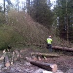 Clearance of section of trees to make way for a community planting area 3 (Small)