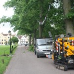 Crown lifting line of protected trees for Olympic torch to come through