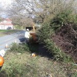 Fallen hedge from the weight of heavy snow - before