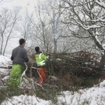 SSSI Area - Tree & Scrub Clearance & Treatment