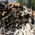 Logs for splitting