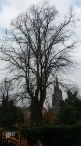 Minster Pool Walk - before work (Small)