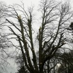 Natural Fracture Pruning - before