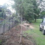 Replanting - TPO tree replacement (Small)