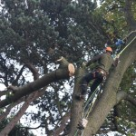 Rigging: branch free and lowering