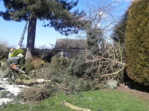 Storm damaged pine tree clear-up (Small)