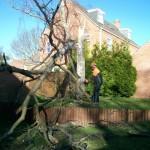 Fallen tree clear-up
