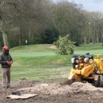 Stump grinding - at Golf Club 2 (Small)