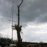Tree removal with unmoveable boat underneath