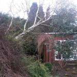 Windblown tree clear-up
