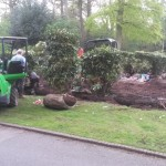 Planting rhododendrons : planting.