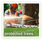 Protected Trees