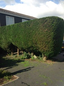 Hedge trimming - finished (Small)