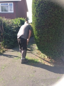 Hedge trimming tidying up (Small)