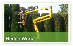 arboriculture-hedge-work