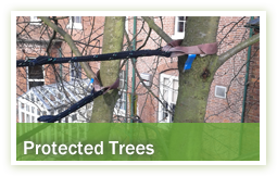 arboriculture-protected-trees