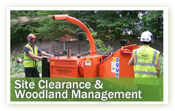arboriculture-site-clearance