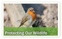 conservation-environment-protecting-our-wildlife