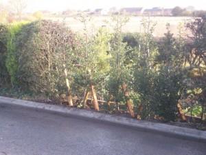 Hedge repair
