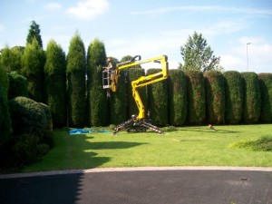 Hedge reshaping