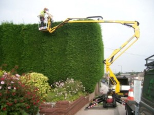Hedge trimming with MEWP (Small)