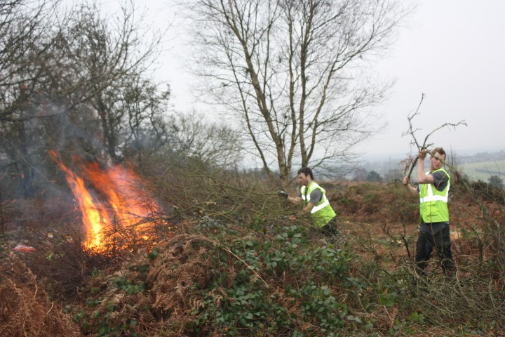 Japanese Knotweed Pictures >> Site Clearance & Woodland Management | Acme Tree Services