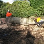 Large diseased beech tree removal - during 7 (Small)