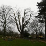 Natural Fracture Pruning - after