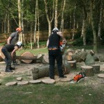 Oak - sectional felling clear up 3 (Small)