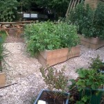 School garden - planters
