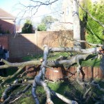 Storm damaged tree clear-up