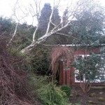 Windblown tree clear-up