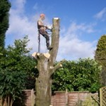 Tree surgery dismantling tree - poss feature pic 2 (Small)