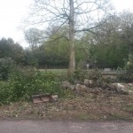 Planting rhododendrons : This is the garden before, with vegetation to be cleared.