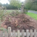 Planting rhododendrons : This is the garden before, with vegetation being cleared.