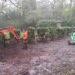 Planting rhododendrons : planting in heavy rain!