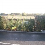 Replanting where a car had gone through the hedge.