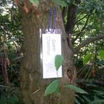 Forest garden labels