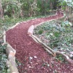 Forest school meandering pathways