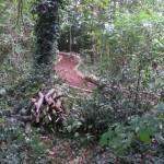 Forest School - meandering pathways